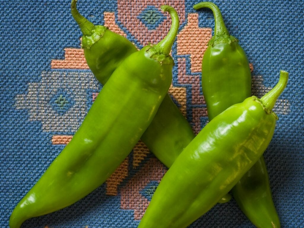 Hatch Green Chile Store fresh chiles