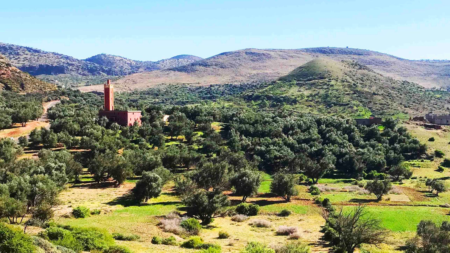 Morocco Gold Olive Groves