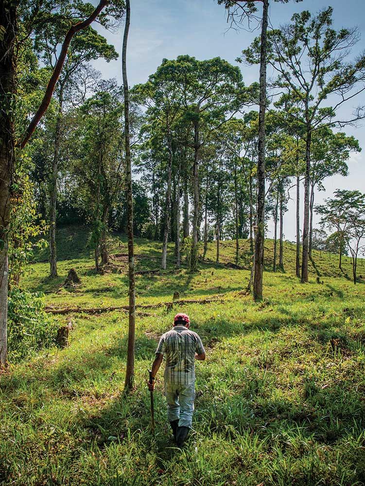 Pereira's farm