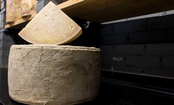 A Brief History of Cheddar Cheese