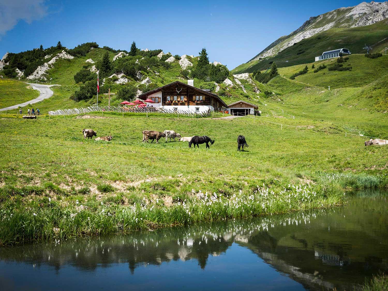 Lucian's Kriegeralpe mountain hut