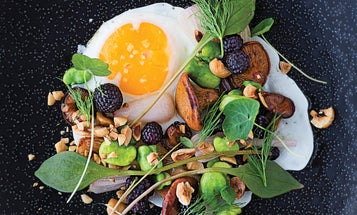 Fried Egg with Hazelnuts, Chanterelles, Green Garlic, and Blackberries