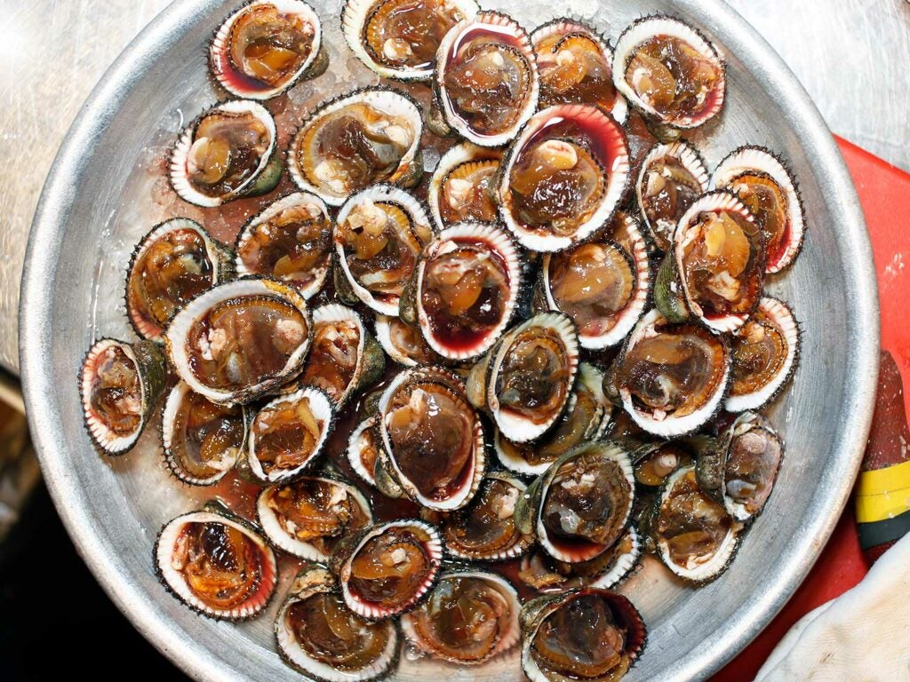 Meaty blood clams