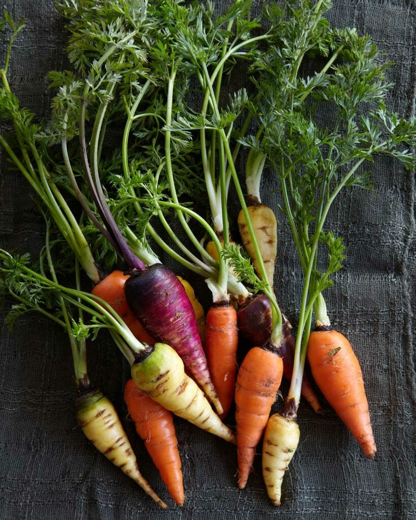 carrot roots