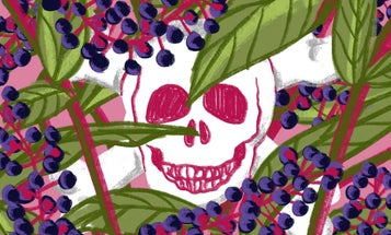 How Did This Poisonous Plant Become One of the American South's Most Long-Standing Staples?