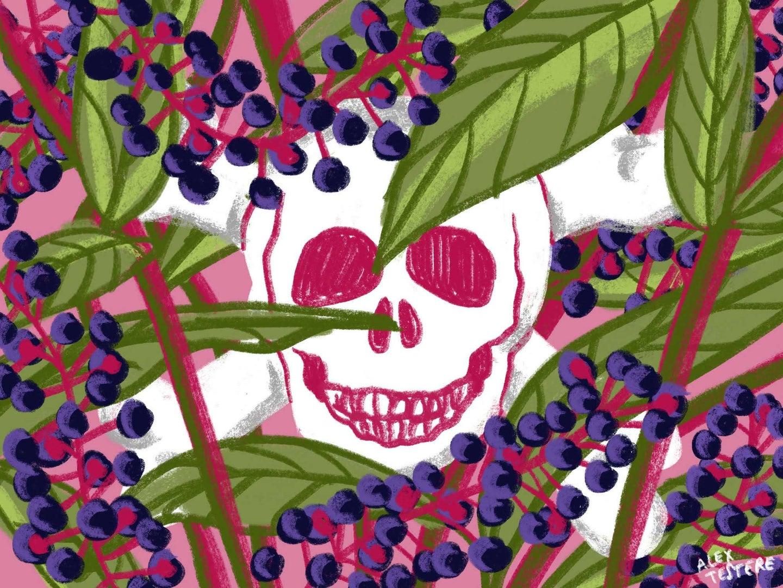 Illustrated skull and cross bones