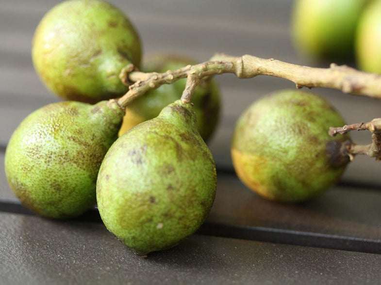 18 Caribbean Fruits to Know and Love