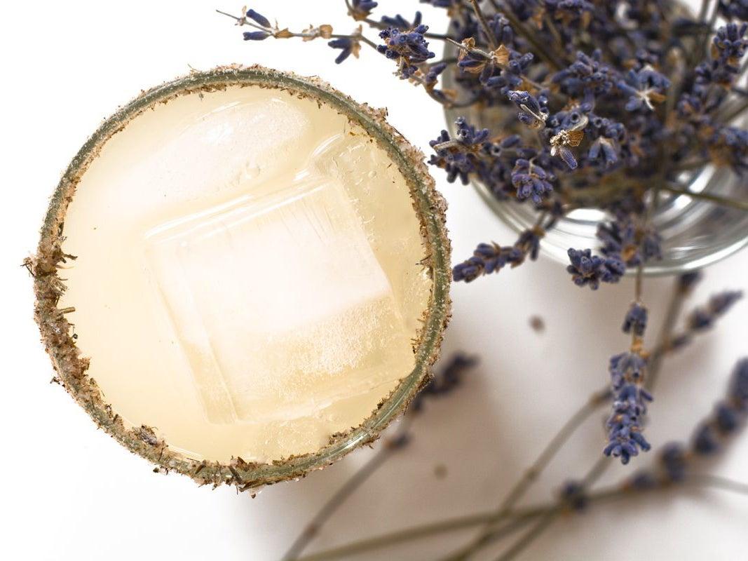 Lavender Paloma
