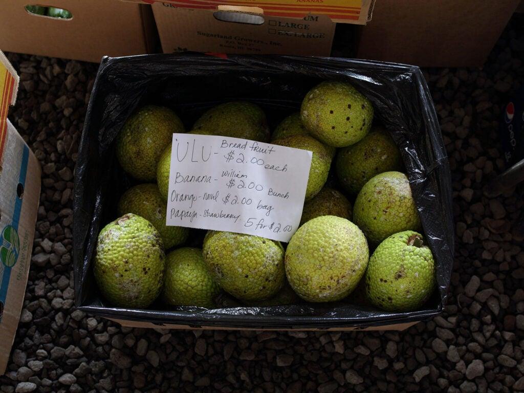 """Breadfruit"""