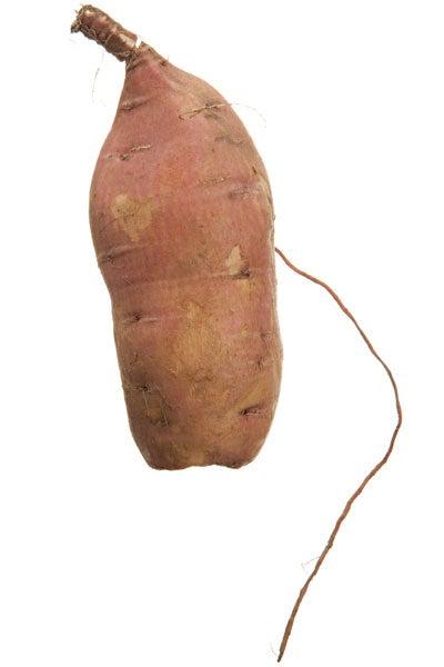 Willowleaf sweet potato