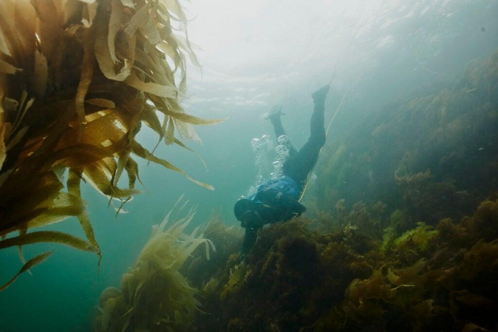 Diving in Tasmania