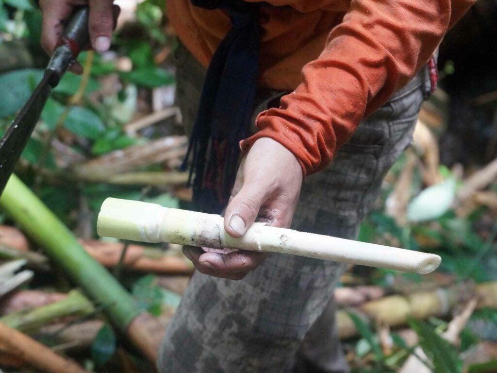 Nagaland Bamboo