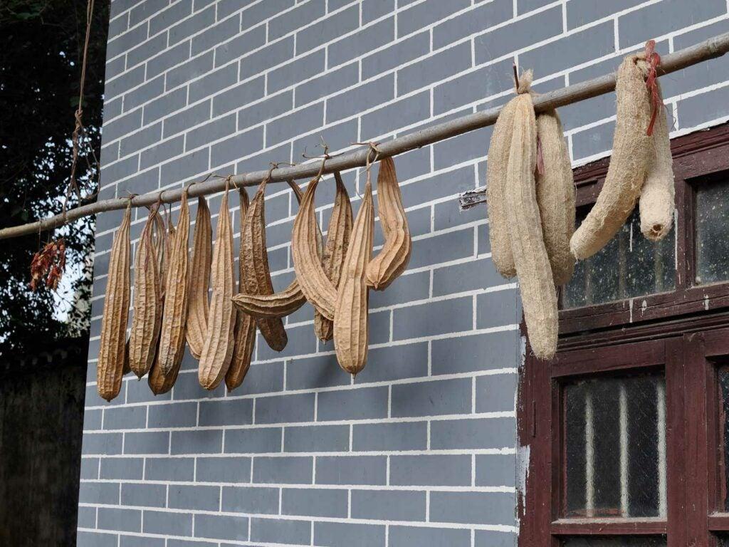 drying loofas
