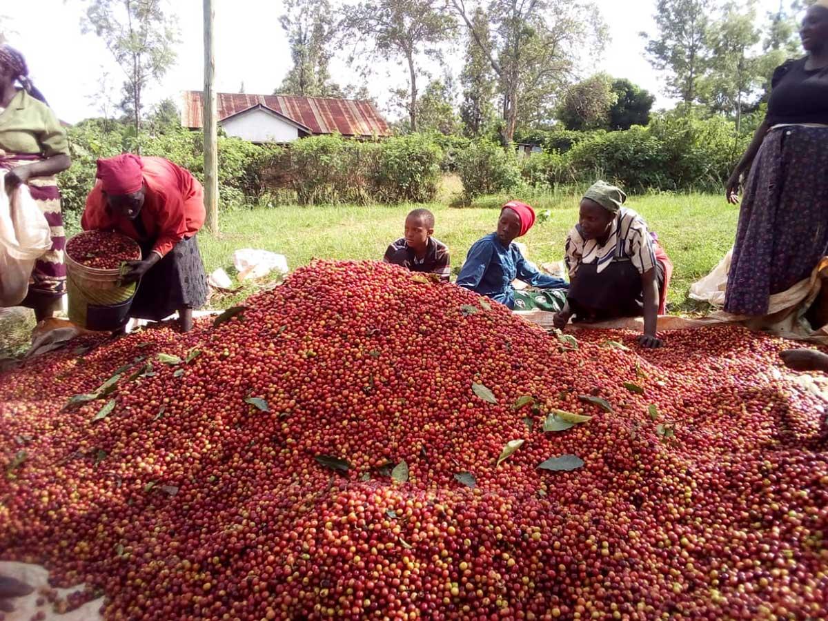 Kenya's Mountain View Farm