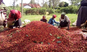 How Kenya Is Becoming a Nation of Coffee Drinkers