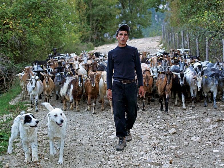 Abruzzo Shepherding wool goat sheep milk cheese