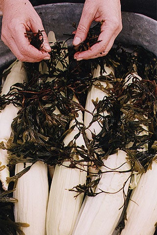 Repeat this process, layering seaweed between the corn.