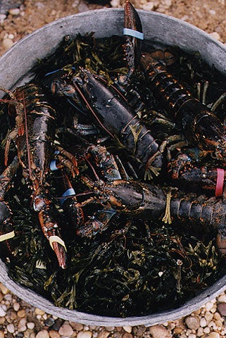 Add another layer of seaweed between mussels, and lobsters, finishing with a layer of seaweed.