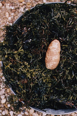Place the whole potato in the center, then mound a final, thick seaweed layer over it.