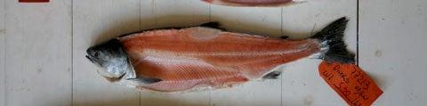httpswww.saveur.comsitessaveur.comfilesimport2008images2008-05634-112_know_your_salmon_3_480.jpg