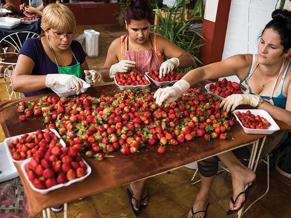 Alpízar sourced his strawberries from another farm