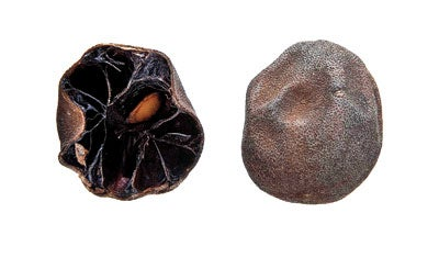 Sour Power: Cooking with Dried Limes