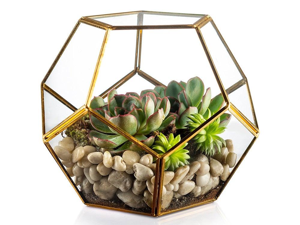 KooK Geometric Glass Terrarium, Elegant Design, Plants, Succulents, Votive Candle Holder (Gold)