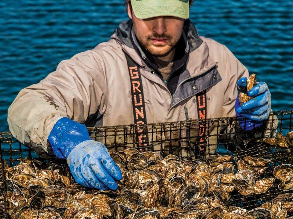 Mark Pagano sorts a tray of oysters