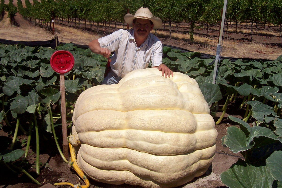 Weekend Reading: Giant Pumpkins, The Art of Fried Chicken, Speaking Out Against the PSL Craze, and More