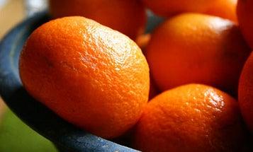 Winter Citrus: Tangerines