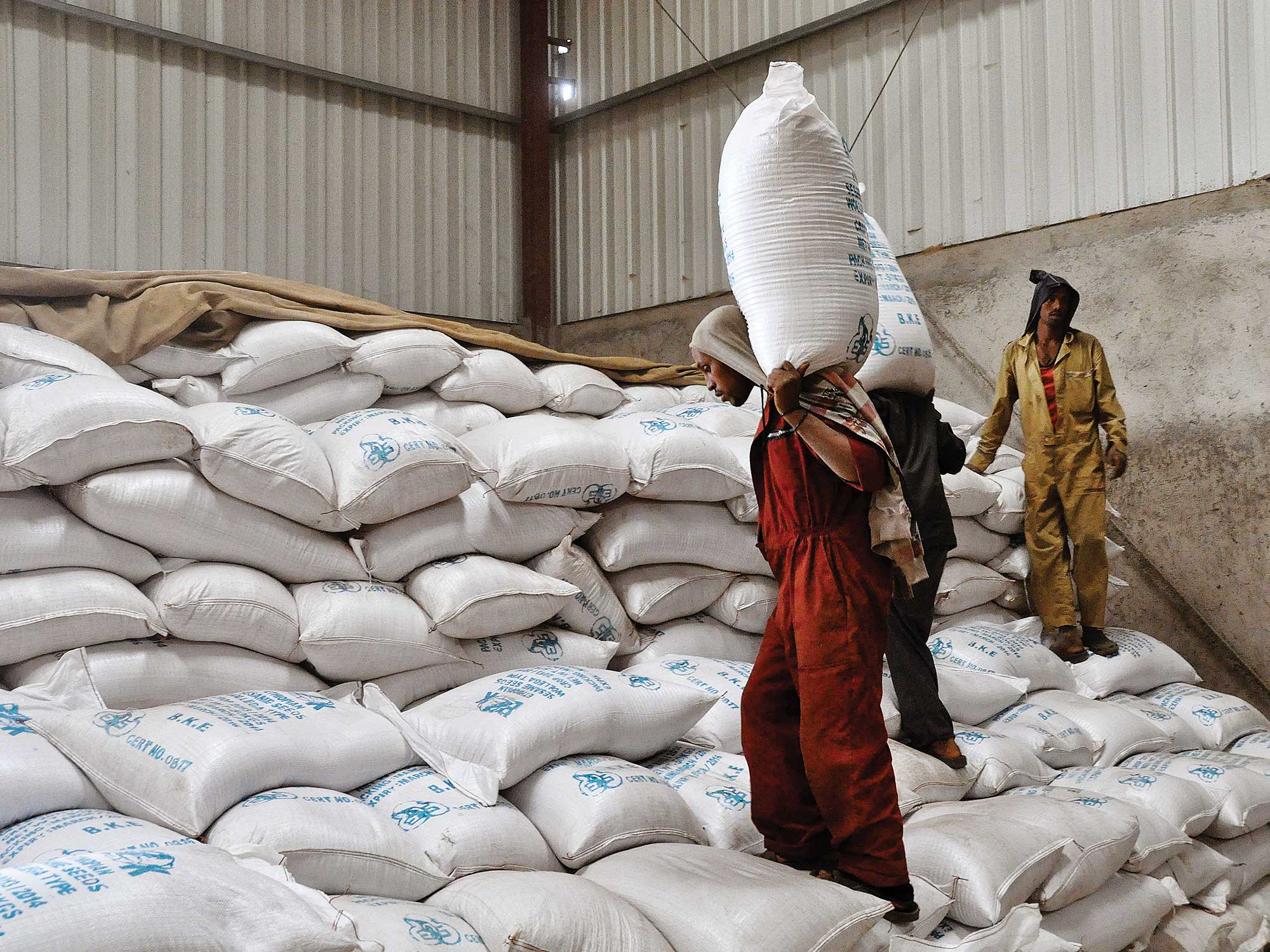 The World's Best Sesame Seeds Come From Ethiopia