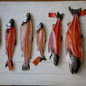 Know Your Salmon