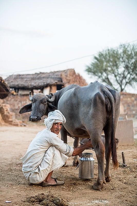 north-india-alwar-region-agriculture