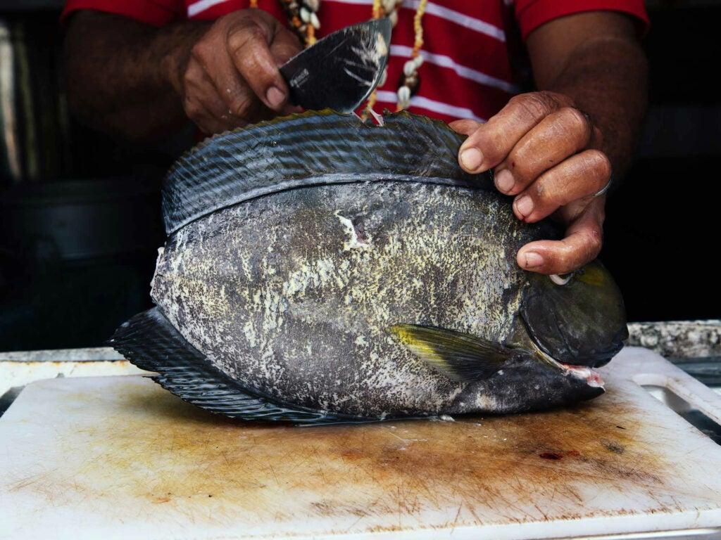 preparing fish for cooking