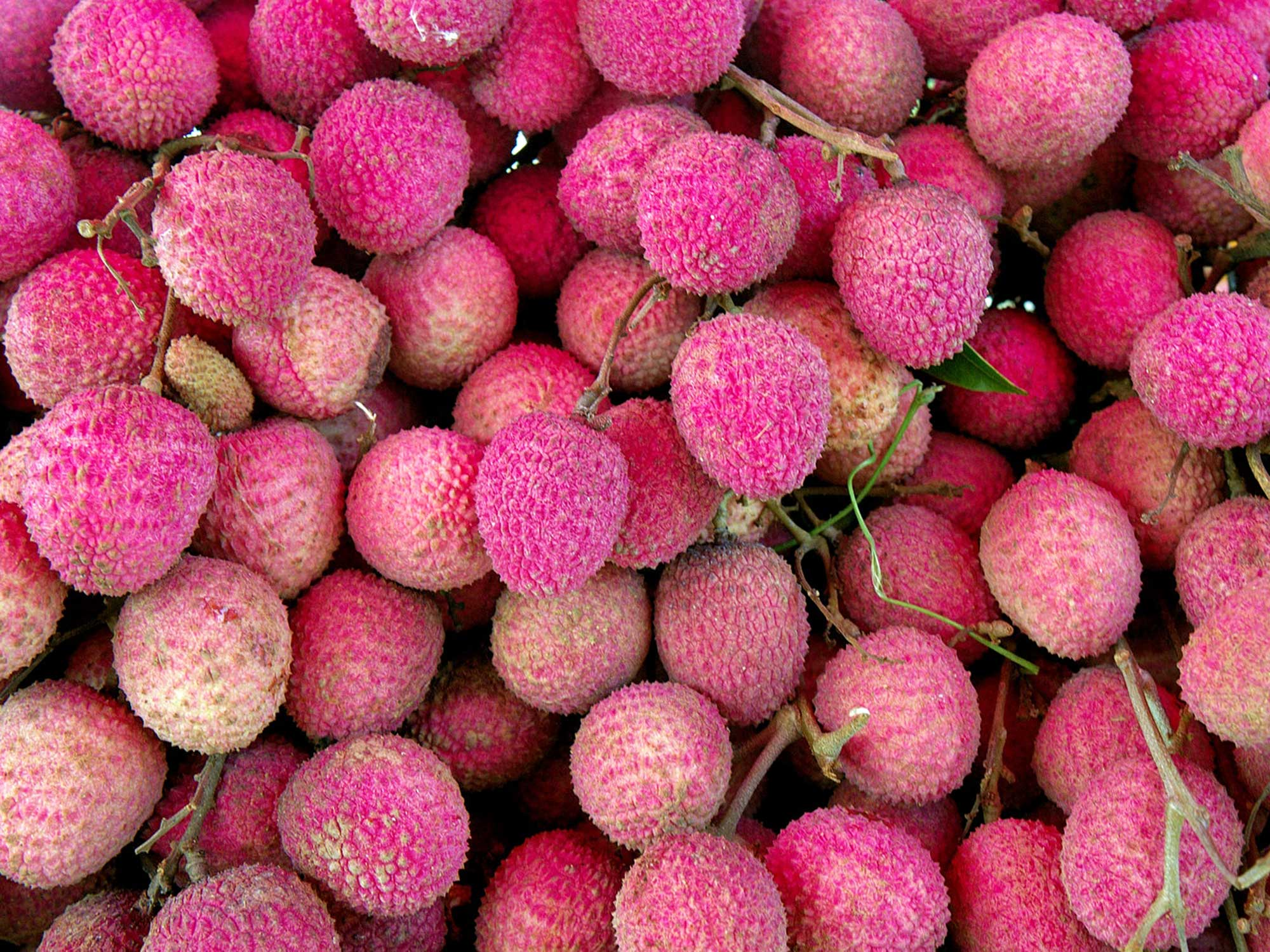 How a Popular Tropical Fruit Caused India's Deadly Summer Illness