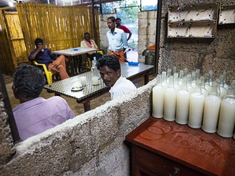 In Kerala, Coconut Sap Gets a Boozy Kick
