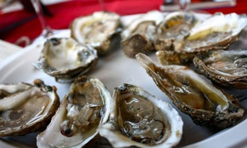 The Oyster Regions of Virginia