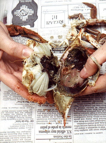 httpswww.saveur.comsitessaveur.comfilesimport2007images2007-1237-How-to-Pick-a-Crab_3.jpg