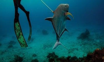 This Award-Winning Spearfisher Catches Dinner 75 Feet Under Water