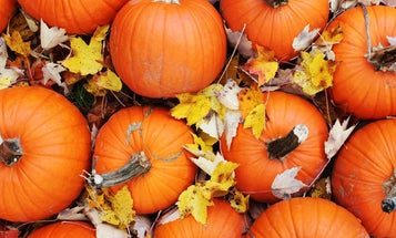 The Contrarian's Guide to Legitimately Delicious Pumpkin Beer
