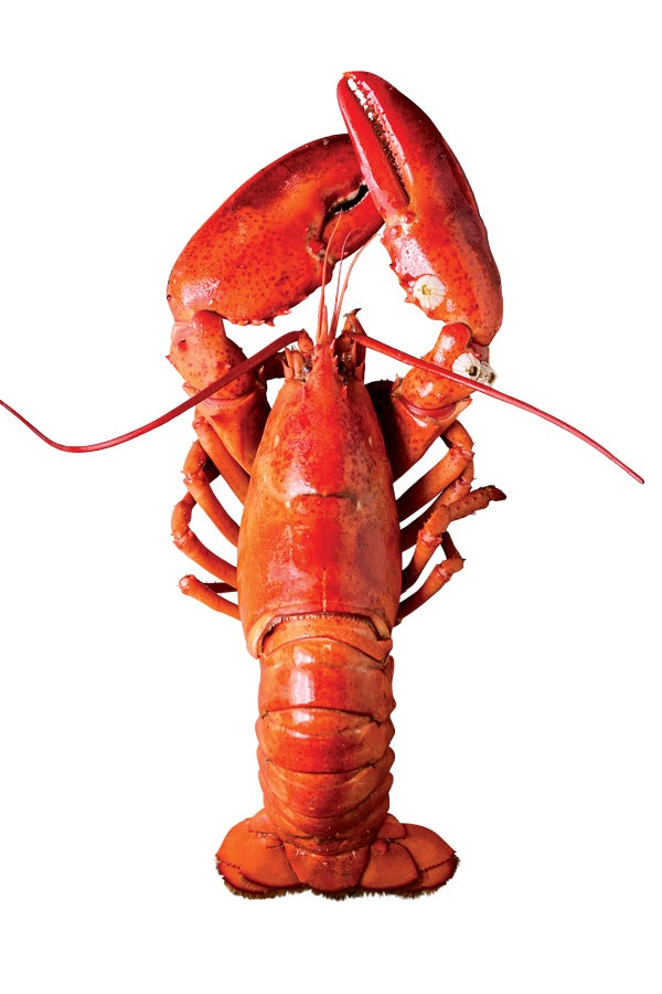 httpswww.saveur.comsitessaveur.comfilesimport2014feature_lobster-image_600x900.jpg