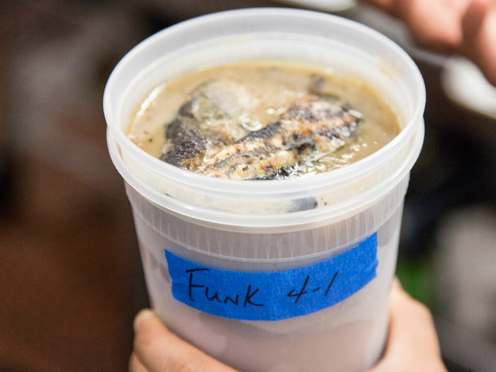 Lao Fish Funk Sauce