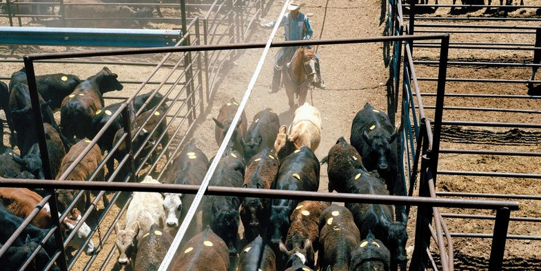 A Day With the Texas Law Man Who Catches Cattle Thieves