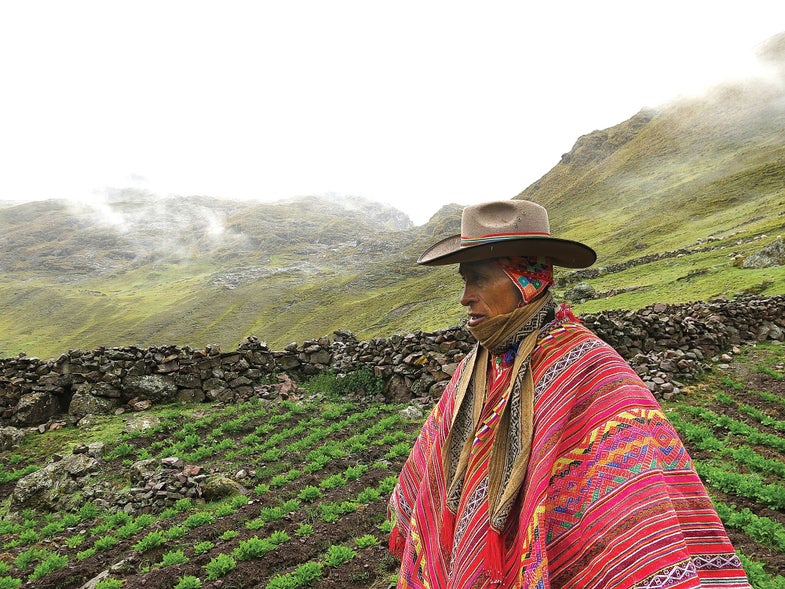How a Peruvian Farmer is Growing 180 Kinds of Potatoes