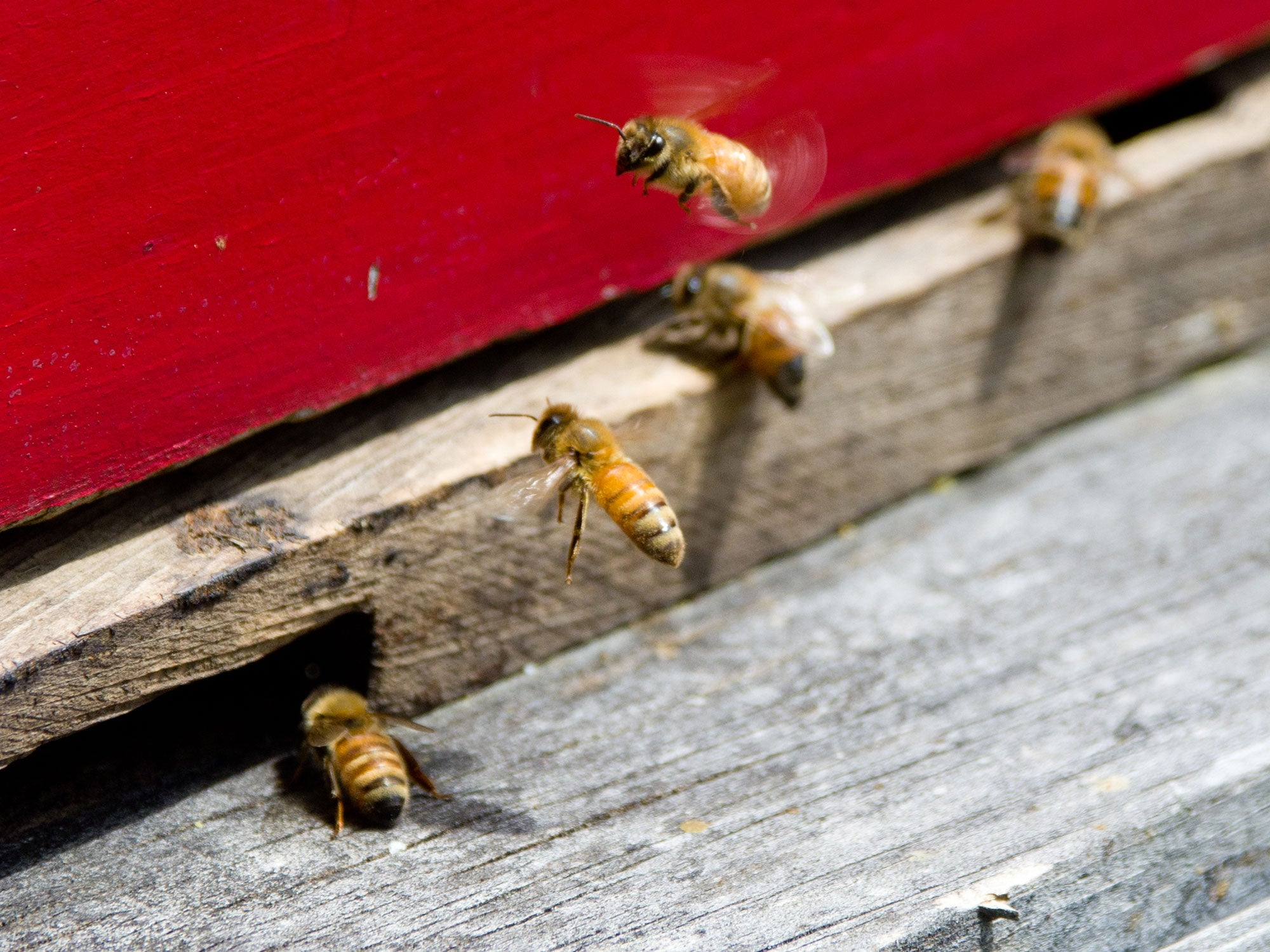 How Scientists Are Racing to Save Our Bees