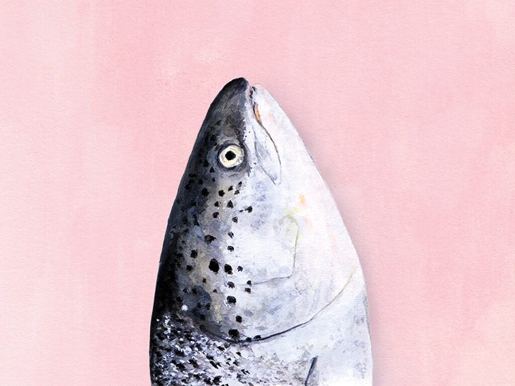 Fish Head Illustration