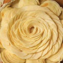 The Art of the Tart: How to Make a Beautiful French Apple Tart