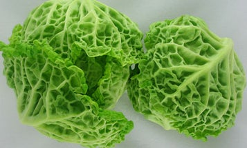 An Ode To Savoy Cabbage