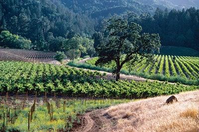 4 Vineyards to Visit