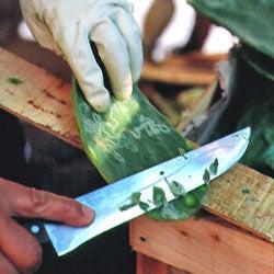 Preparing Cactus Paddles